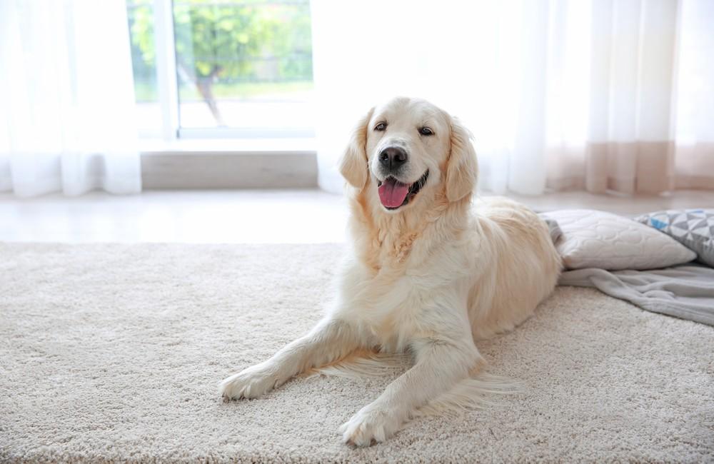 Pet friendly floor | Floorscapes