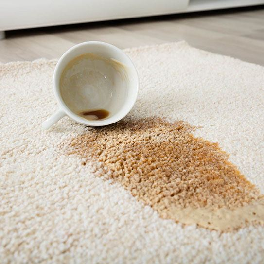 Carpet care | Floorscapes
